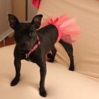 Adopt A Pet :: Stella - Charlotte, NC