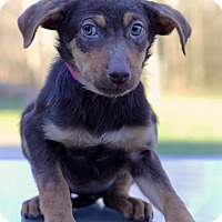 Adopt A Pet :: Laverne - Waldorf, MD