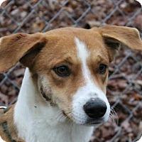 Collie Mix Puppy for adoption in Washington, D.C. - Heidi