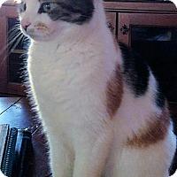 Adopt A Pet :: Penny - Morganton, NC