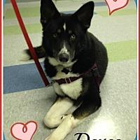 Adopt A Pet :: Deuce - Raleigh, NC