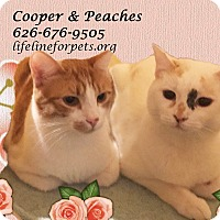 Adopt A Pet :: A Great Duo: PEACHES & Cooper - Monrovia, CA