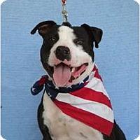 Adopt A Pet :: Tank - Killen, AL