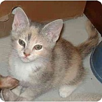 Adopt A Pet :: Lily - Harriman, NY