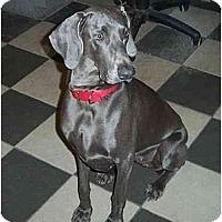 Adopt A Pet :: Maya  **ADOPTED** - Eustis, FL
