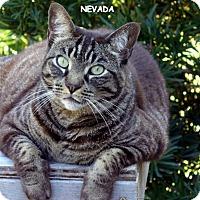 Adopt A Pet :: Nevada - Naples, FL
