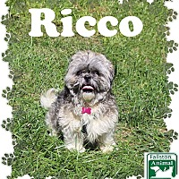 Adopt A Pet :: Ricco - Fallston, MD