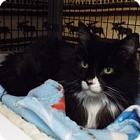 Adopt A Pet :: Blanche - Grants Pass, OR