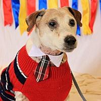Adopt A Pet :: Jackson - Flushing, MI