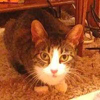Adopt A Pet :: Harper - Flushing, NY