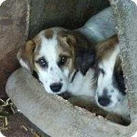 Adopt A Pet :: Sly - Minneapolis, MN