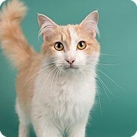 Adopt A Pet :: Hunter - Wilmington, DE