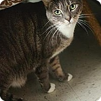 Adopt A Pet :: Tabatha Gray - Fresno, CA
