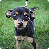 Adopt A Pet :: Frisco - Broomfield, CO