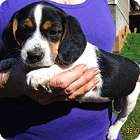 Adopt A Pet :: IMOGENE - Brookside, NJ