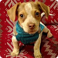 Adopt A Pet :: Mason - Knoxville, TN