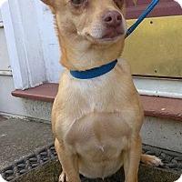 Adopt A Pet :: Coco - Lawrenceville, GA