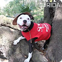 Adopt A Pet :: Black jack - Lakeland, FL