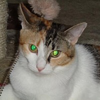 Adopt A Pet :: Champagne - Watsontown, PA