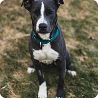 Adopt A Pet :: Otto - Davenport, IA