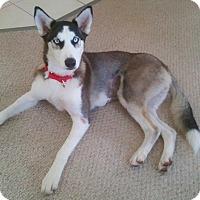 Adopt A Pet :: Ghia - Clearwater, FL
