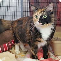 Adopt A Pet :: Zoey - Diamond Springs, CA