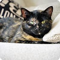 Adopt A Pet :: Tina - Vancouver, BC