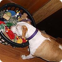 Adopt A Pet :: Sabrina - Youngstown, OH