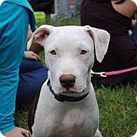Adopt A Pet :: Darla - Orlando, FL