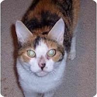 Adopt A Pet :: Pixie - Summerville, SC