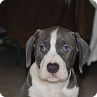 Adopt A Pet :: Lucky - Tumwater, WA