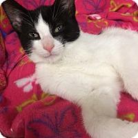 Adopt A Pet :: Wally - Byron Center, MI