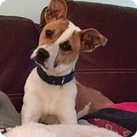 Adopt A Pet :: Meadow - Richmond, VA