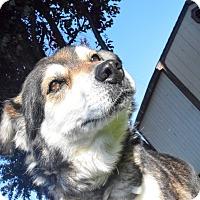 Adopt A Pet :: Delta - Meridian, ID