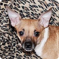 Adopt A Pet :: Casey - Portola, CA