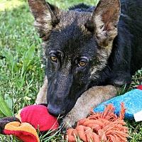 Adopt A Pet :: Lola - Winters, CA