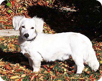 Dachshund Mix Dog for adoption in San Jose, California - Ghost