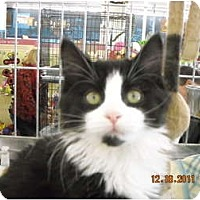 Adopt A Pet :: Hera - Riverside, RI