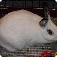 Adopt A Pet :: Ghost - Williston, FL