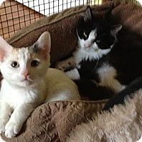 Adopt A Pet :: Jack and Jill - Strongsville, OH