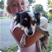 Adopt A Pet :: Penelope - Braintree, MA