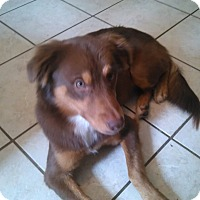 Adopt A Pet :: Lexi - Kingwood, TX