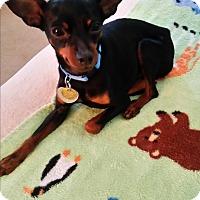 Adopt A Pet :: Rocky (McDonough, GA) - McDonough, GA