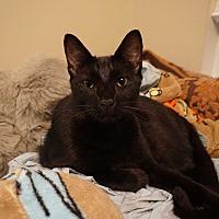 Adopt A Pet :: Stormy - Houston, TX