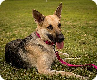 German Shepherd Dog Mix Dog for adoption in Phoenix, Arizona - Zya