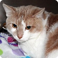 Adopt A Pet :: Nesta *CL* - Independence, MO