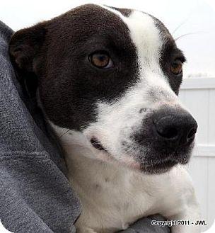 Terrier (Unknown Type, Medium)/Terrier (Unknown Type, Medium) Mix Dog for adoption in Dallas, North Carolina - JENNA