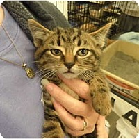 Adopt A Pet :: Timone - Warren, MI