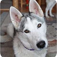 Adopt A Pet :: Jake - Kettle Falls, WA