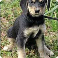 Adopt A Pet :: Chelsea - Staunton, VA